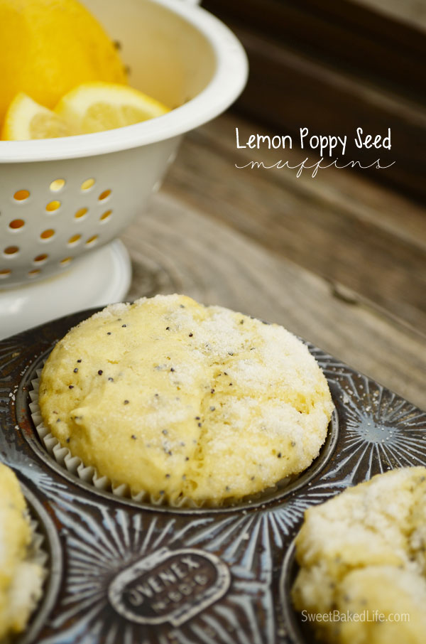 Tangy Lemon Poppy Seed Muffins | Sweet Baked Life